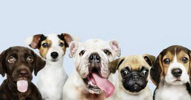 residencia canina para tu mascota